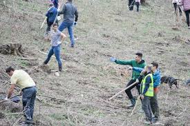 CERT volunteers want to afforest an area of 1.5 hectares in Cluj County