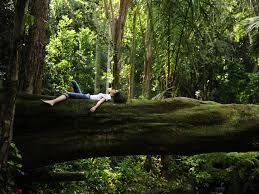 What is forest bathing and how does it help